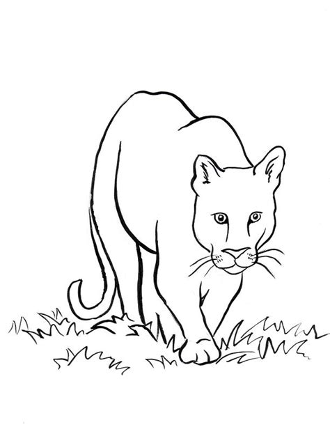 simple lion coloring page sea lion coloring page coloring home