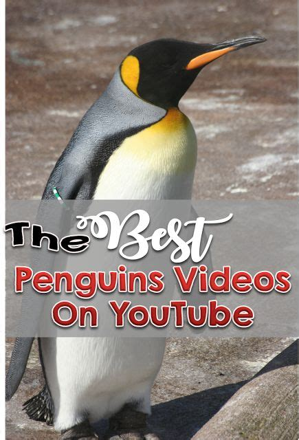the first man penguin b00gedd3z6 382 best classroom technology images on google classroom classroom ideas and