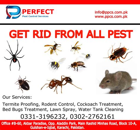 perfect pest control services termite proofing treatment