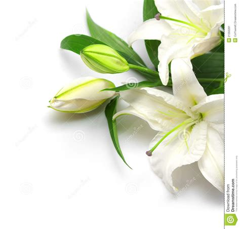 Bouquet Of White Lilies Stock Image   Image: 21350281