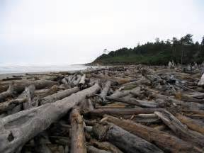 le treibholz file driftwood expanse northern washington coast png