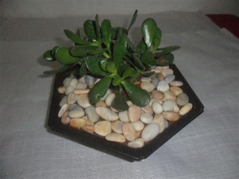 imagenes jardines con piedras piedras blancas decorativas para jardines bs 980 000 00