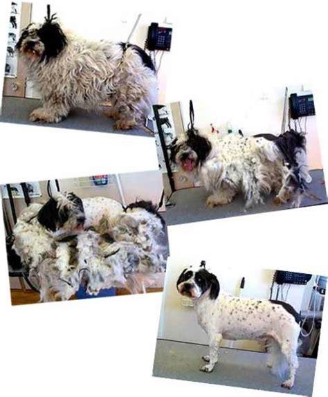 u wash puppy n suds u wash professional pet grooming nanaimo bc 2209 wilgress rd canpages