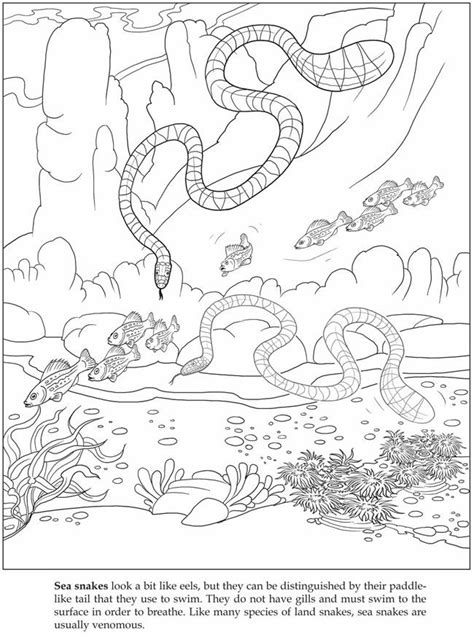 sea snake coloring page sea snakes coloring pages lineart animals ocean dwellers