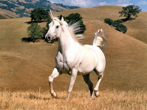 imagenes de unicornios de verdad unic 243 rnios porque eles foram extintos assunto da vez