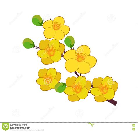 new year flower tradition yellow apricot flower traditional lunar new year in