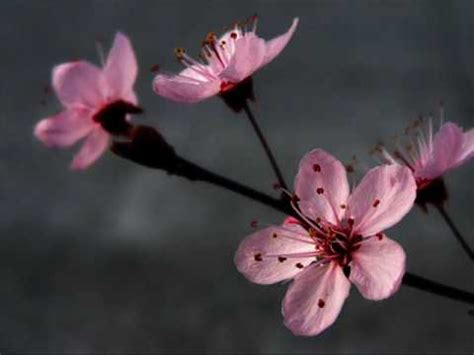 imagenes flores relajantes the very best of enya youtube