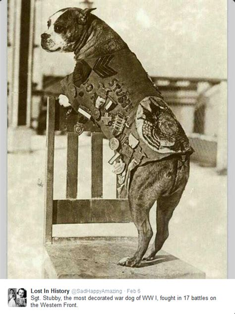 Sergeant Stubby Facts Re Your Brain To Happiness Sergeant Stubby World War I