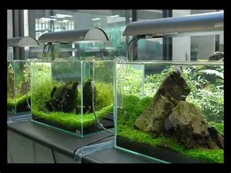Aquarium Aquascape Lu Led Yang 18 W cherche cuve nue de 60 60 x 30 x 35 env