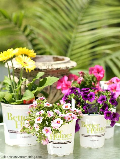 Better Homes And Gardens Flowers 38 Best Images About We Container Gardens On Duke Dubai And Walmart