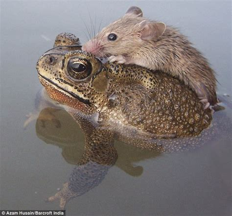 virtually frogs how to stay afloat in the dating pond books i m stuck i need to be toad away rat rescued from the