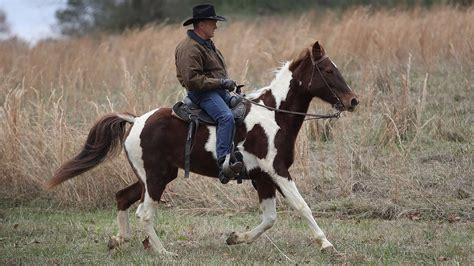 roy moore horse twitter roy moore can t ride a horse for his life and everyone
