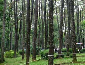 Puzzle Kayu Persegi Binatang Hutan 15 tempat wisata menarik di provinsi sumatera selatan