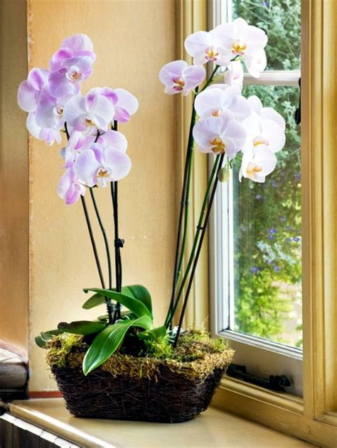 tips  beautiful indoor plants orchid care interior