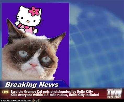 Newspaper Cat Meme - 58 best funny news stories images on pinterest funny