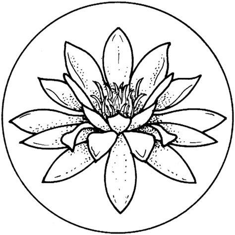 coloring page water lily water lily coloring pages super coloring clipart best