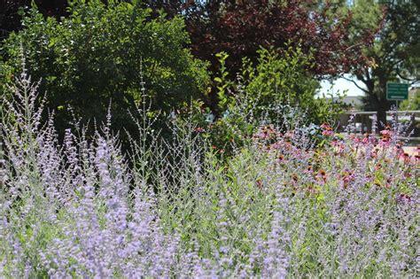 xeriscape backyard greeley xeriscape garden greeley garden tour