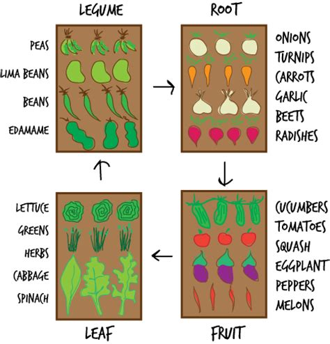 Plant Rotation In Vegetable Garden The Importance Of Crop Rotation Gill Landscape Nursery