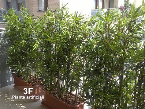 Vasi Per Bamboo by Bamboo U V Resistance 3 Canne Cm 150 3f Piante