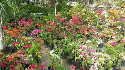 garden flowers and plants garden curacao plants gardening