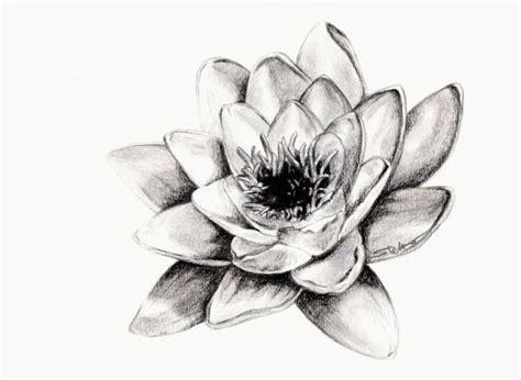fiori disegni a matita 17 migliori idee su disegni a carboncino su