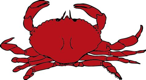 Crab Clipart Free crab clip at clker vector clip royalty free domain