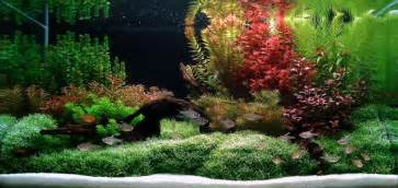 aquarium july 2011