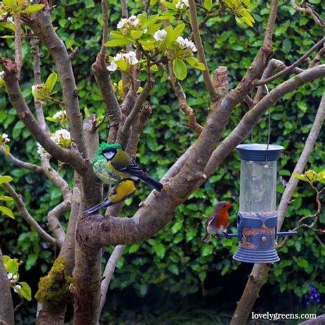 how to get birds to come to feeder amazon com perky pet