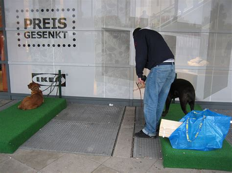 are dogs allowed in ikea ikea provides parking area for customers designtaxi