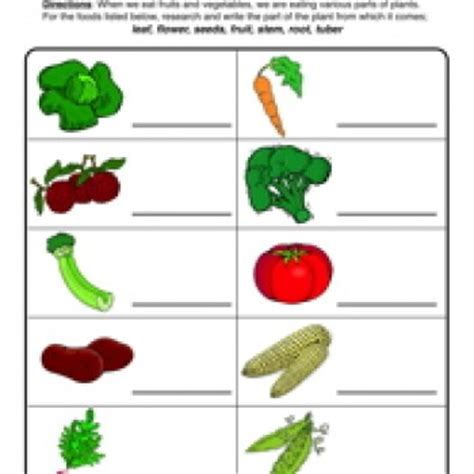 why are plants green worksheet 7 2 plant parts we eat worksheet science worksheets and plants