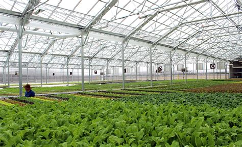 greenhouses in florida florida contractor builds chicagoland greenhouse florida