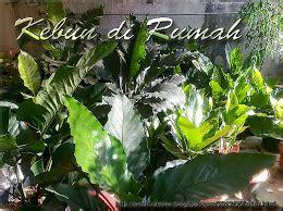 Pupuk Dolomit Untuk Jeruk membuat pupuk untuk media tanam kebun di rumah
