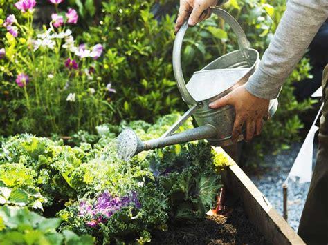 Garden Saga by Practical Guide To Watering The Garden Saga