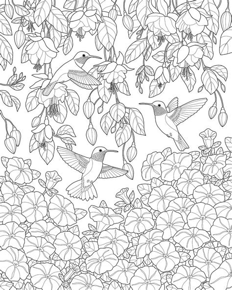 coloring pages hummingbirds flowers hummingbirds and flowers coloring page painting by crista