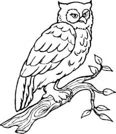 Owl coloring pages on pinterest owl templates cute owl and owl