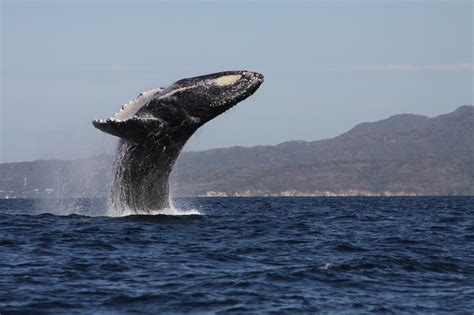 wale gif whale blowhole gif www pixshark images galleries
