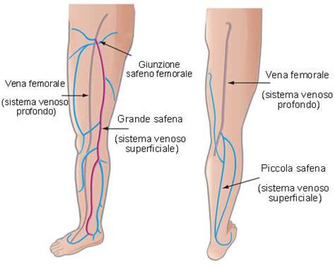 vasi linfatici gambe vene anatomia