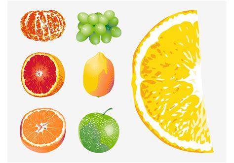 fruit vector vector fruits free vector stock graphics