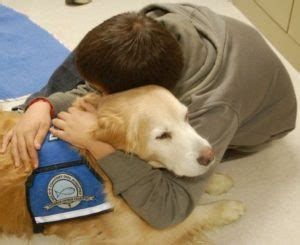 comfort dogs new connecticut law provides comfort dogs to testifying