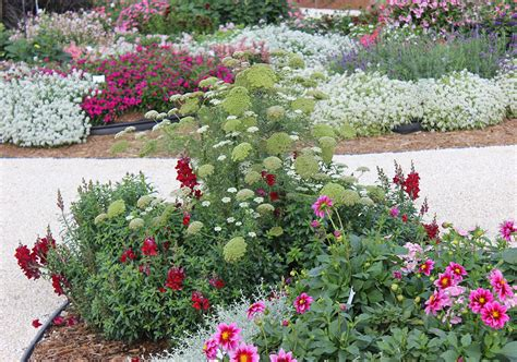 Cutting Flower Garden Design Small Space Cut Flower Garden Ideas Costa Farms