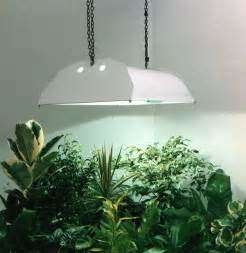 grow lights for indoor plants to create for living