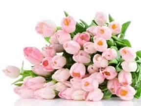 загадки про цветы с ответами и картинками