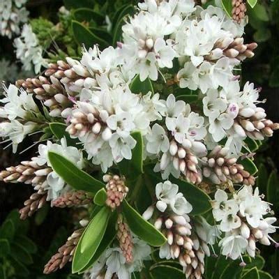 fiori da giardino autunnali piante autunnali da giardino