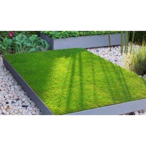 Jual Rumput Jepang jual rumput jepang rumput peking oleh tukang taman