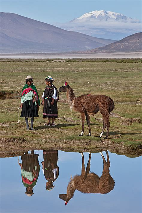 south america camelids  sustainable rural development