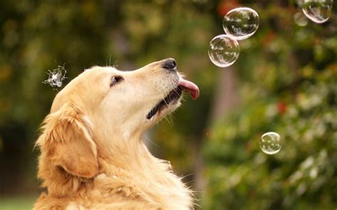 cute puppy dog wallpapers download cute dog wallpaper wallpapers for free download about