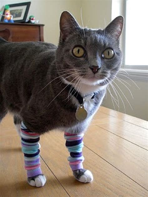 cat windsock adorable diy cat clothing for your friend