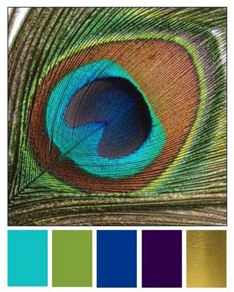 peacock feather colors peacock peacocks