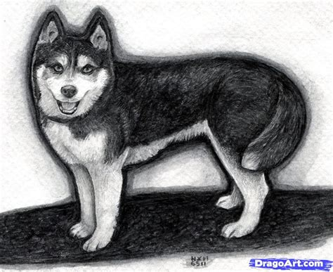 how to draw a husky puppy how to draw a realistic husky step by step realistic drawing technique free