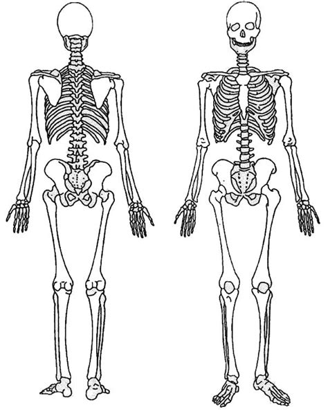back and front of a skeleton coloring page massage